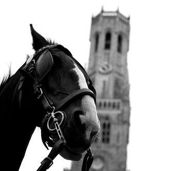 horse-blinder